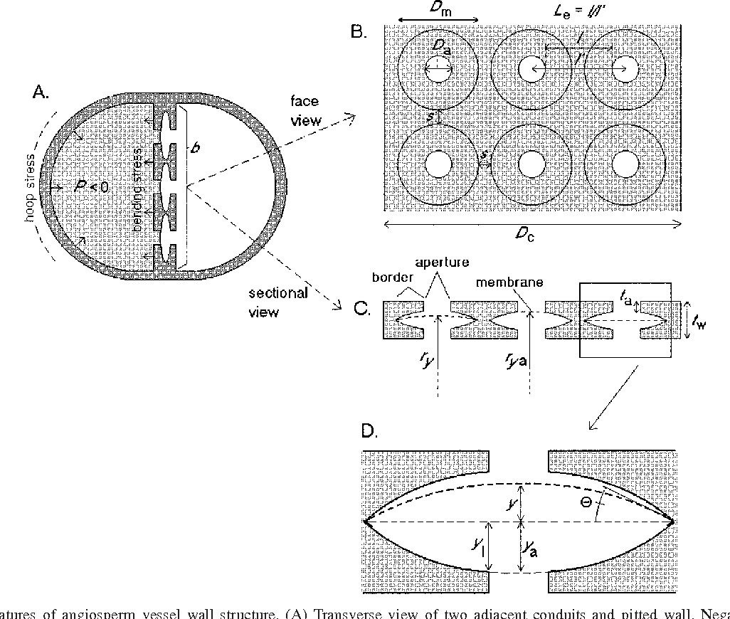Figure 1 from Analysis of circular bordered pit function I