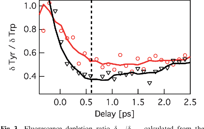 Fig. 3 Fluorescence depletion ratio dTyr/dTrp, calculated from the depletion curves obtained with the optimized pulse (red circles) and with the reference pulse (black triangles) plotted in Fig. 2. Solid lines represent moving averages of the data over 5 points. The vertical dashed line shows the time delay topt chosen for the optimization.