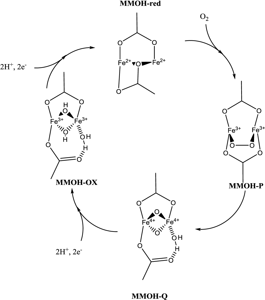 PDF] Structure, function and mechanism of the alternative oxidases ...