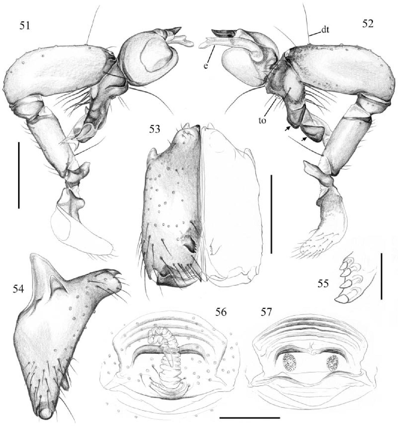 figure 51–57