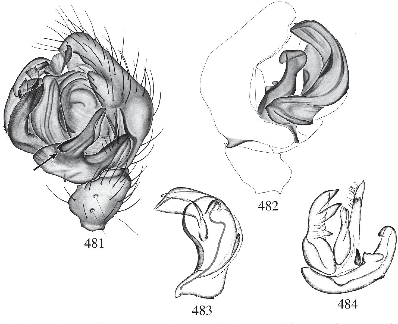 figure 481–484