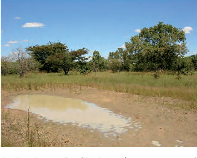 Fig. 4. Type locality of Nothobranchius seegersi, seasonal pool on right side of the main road T8 from Ipole to Rungwa, near Mabangwe village, Tanzania.