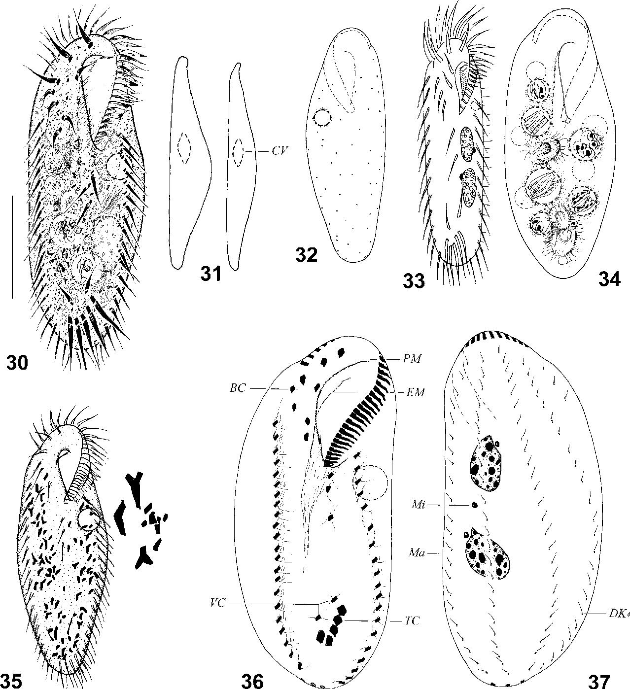 figure 30-37