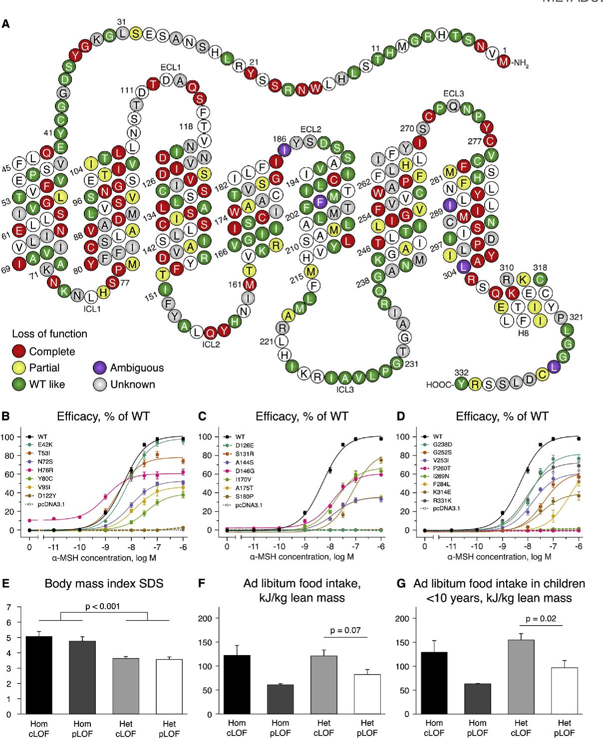 Evaluation Of A Melanocortin 4 Receptor Mc4r Agonist Setmelanotide In Mc4r Deficiency Semantic Scholar