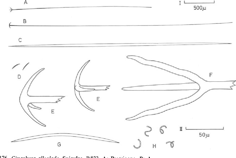 figure 176