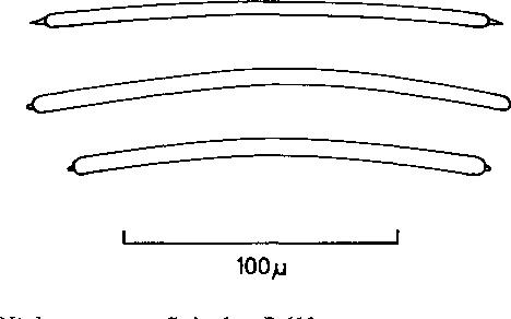 figure 119