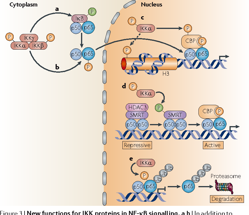 Figure 6 from New regulators of NF-κB in inflammation