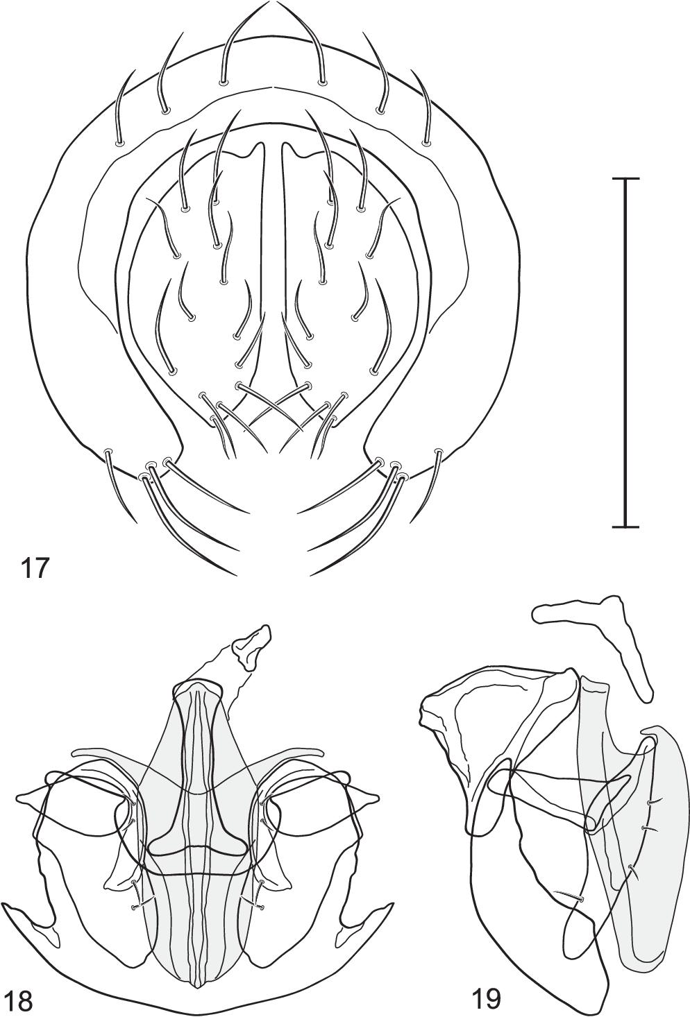 figure 17–19