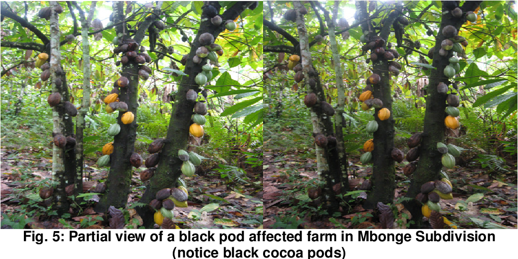 PDF] Climate Variability and Cocoa Production in Meme
