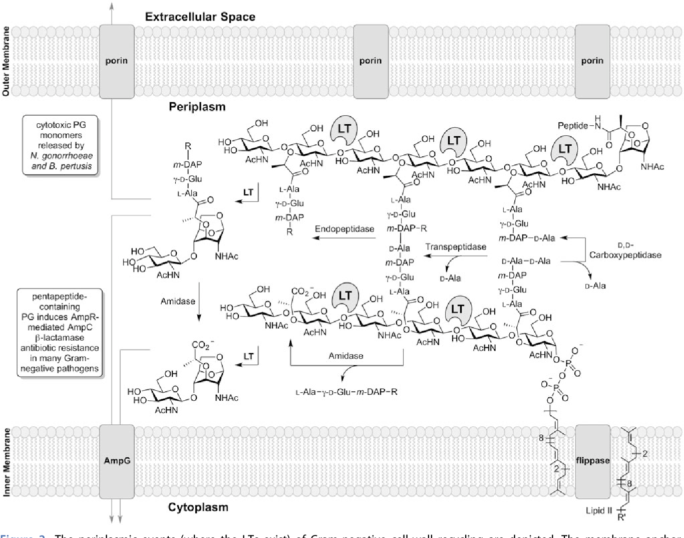 Figure 2 from Lytic transglycosylases: concinnity in