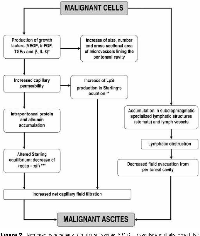 Pdf Pathogenesis Of Malignant Ascites In Ovarian Cancer Patients Semantic Scholar