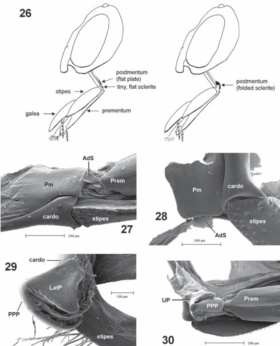 figure 26–30