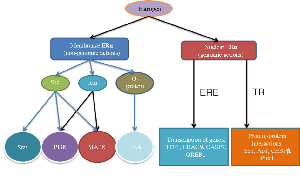 Estrogen In Obesity Associated Colon Cancer Friend Or Foe Protecting Postmenopausal Women But Promoting Late Stage Colon Cancer Semantic Scholar