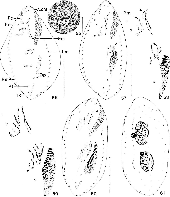 figure 55-61