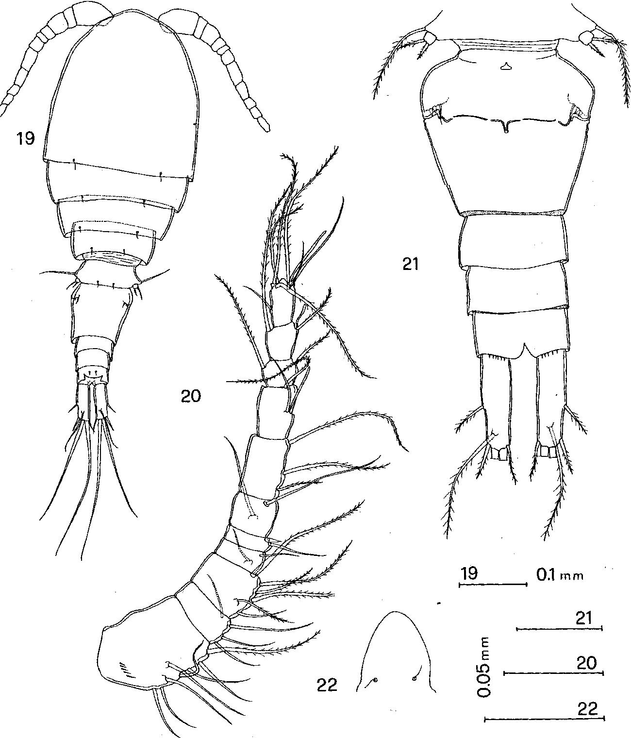 figure 19–22
