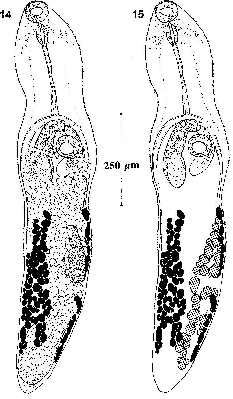 figure 14–15