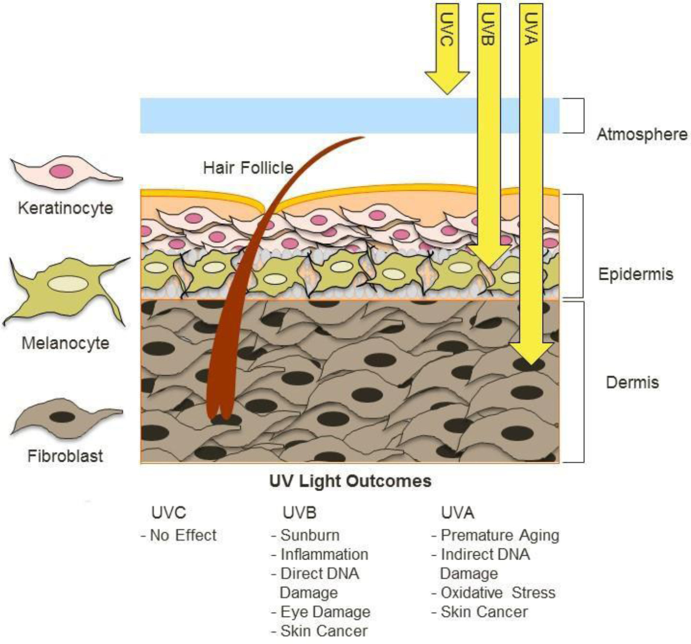 PDF] Ultraviolet radiation, aging and the skin: prevention