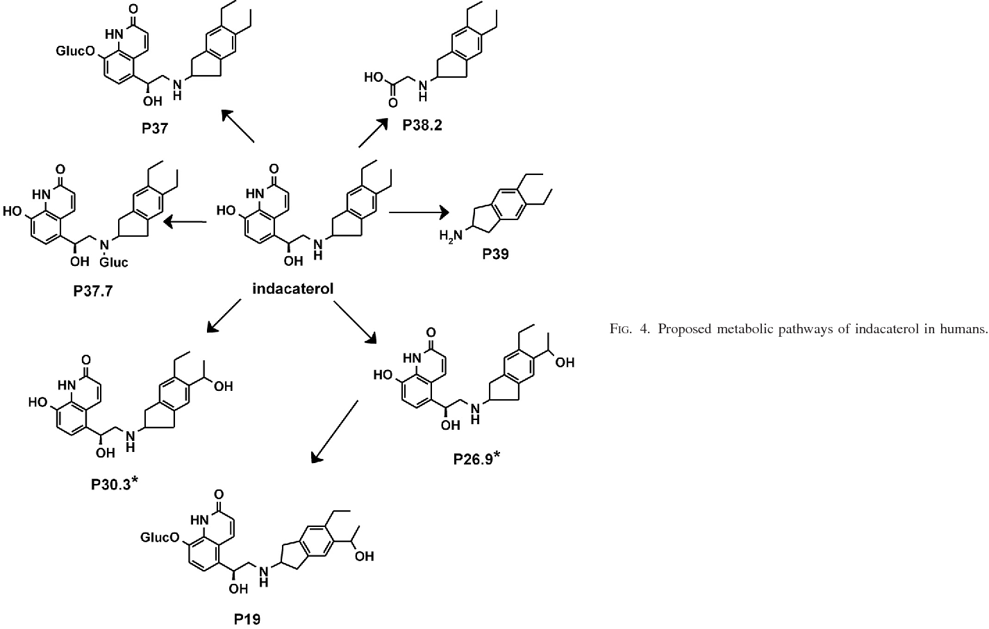 PDF] Metabolism and Pharmacokinetics of Indacaterol in Humans ...