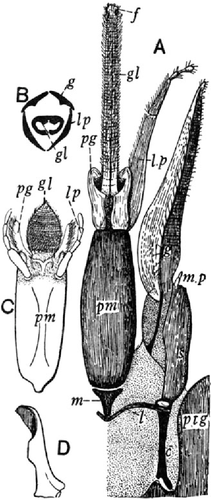 Imms' Outline Of Entomology