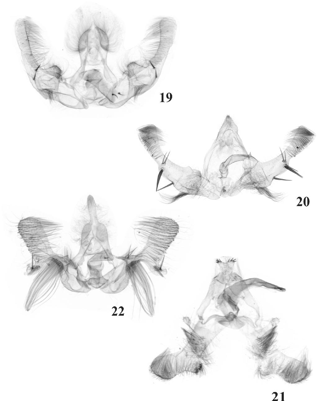 figure 19-22