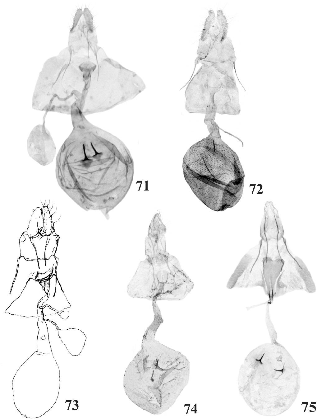 figure 71-75