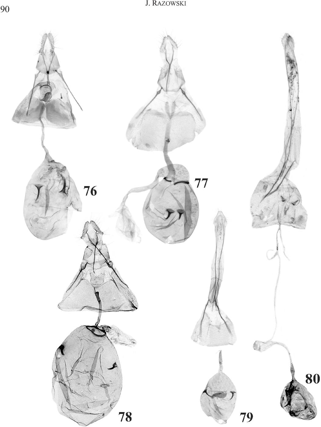 figure 76-80