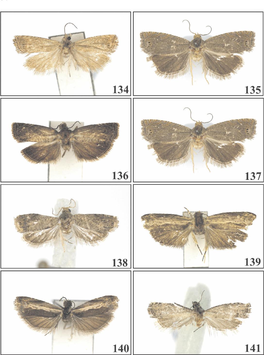 figure 134-141