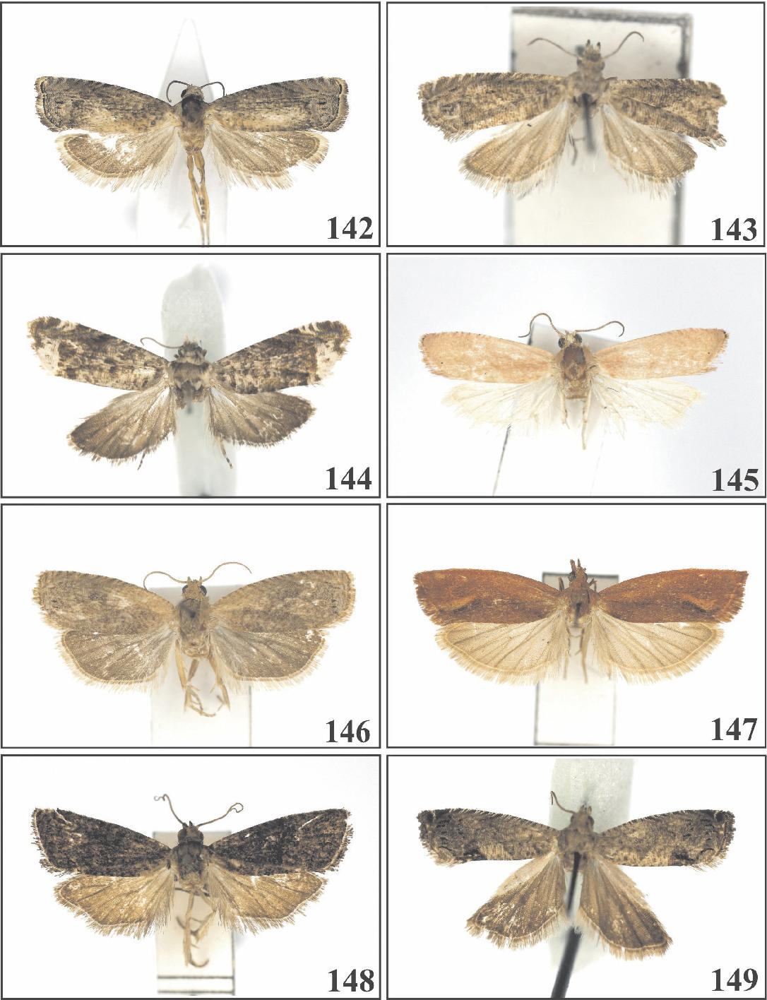 figure 142-149