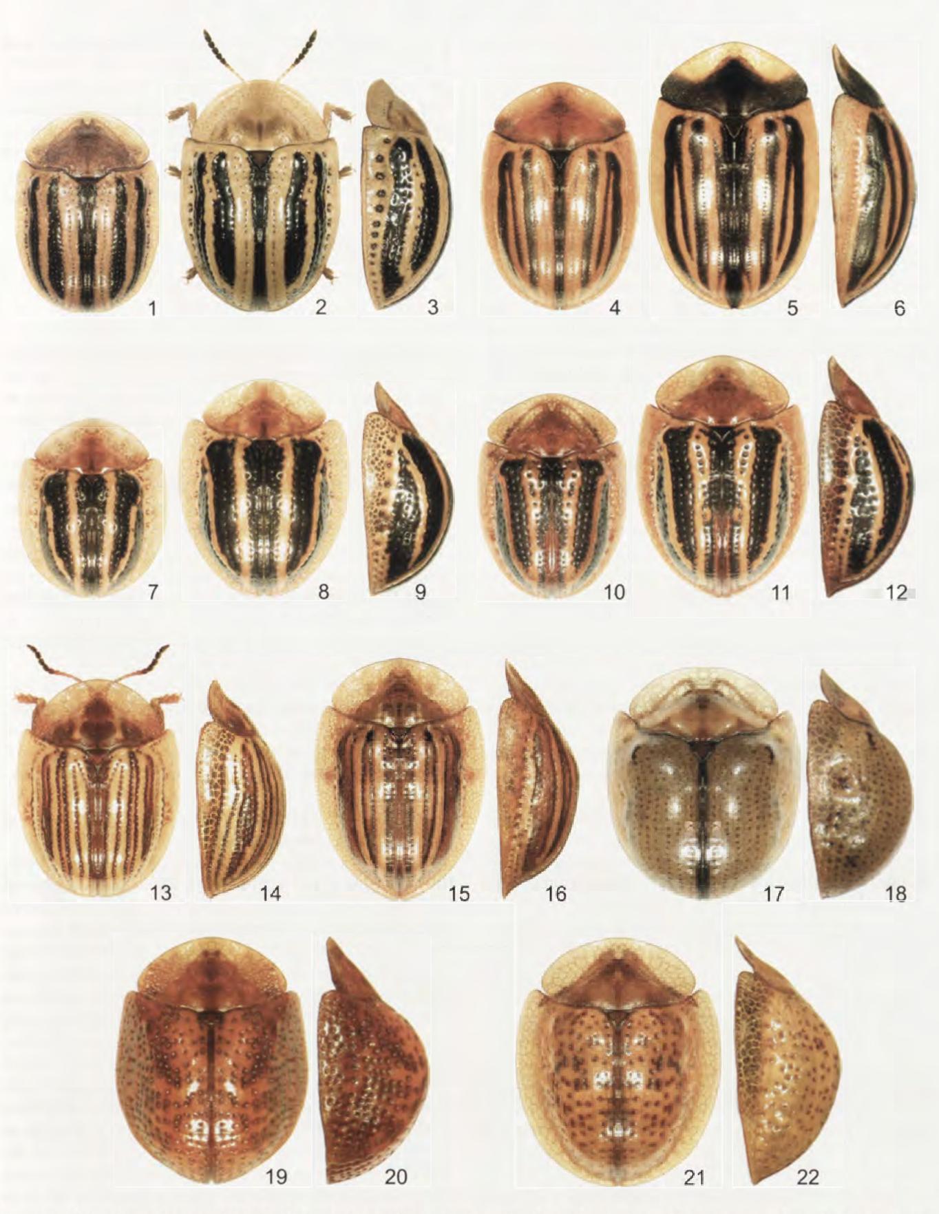 figure 1-22