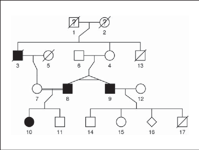 Figure 1 From The Kinship2 R Package For Pedigree Data