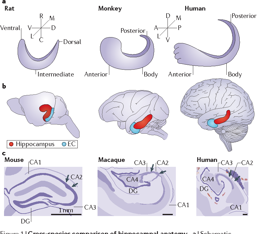 Figure 1 from Functional organization of the hippocampal