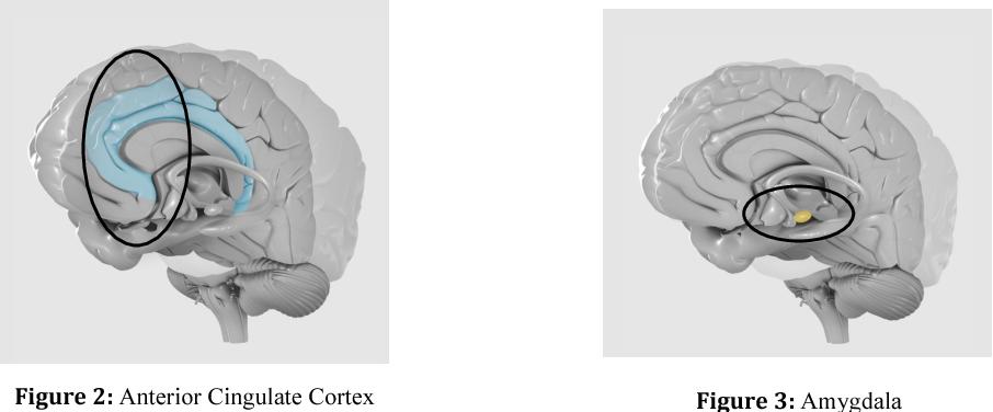 figure 2&3