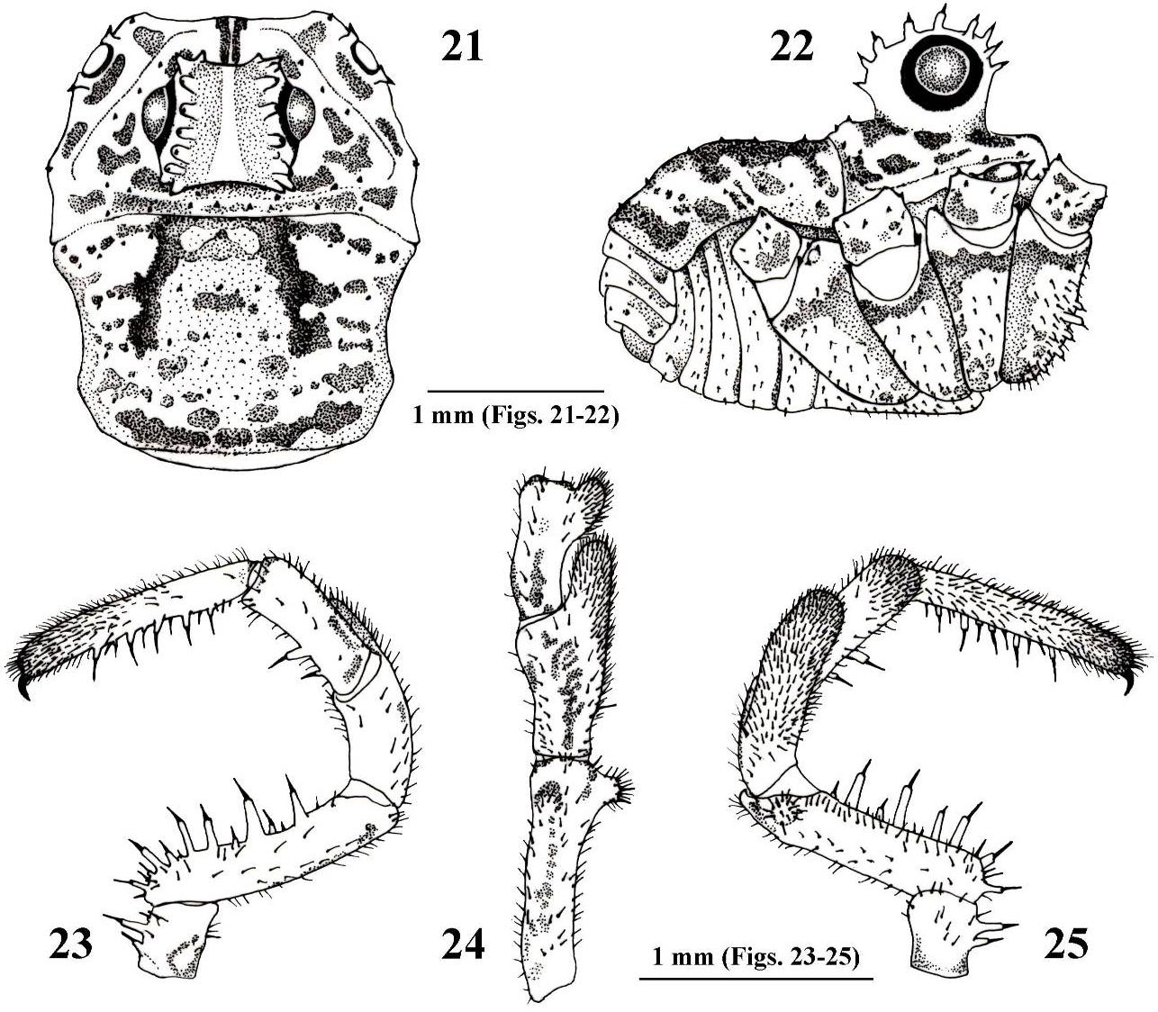 figure 21–25