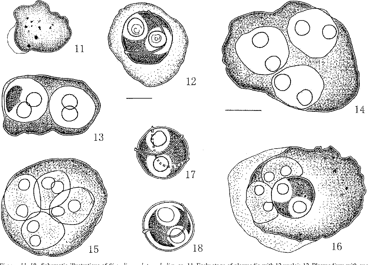 figure 11–18