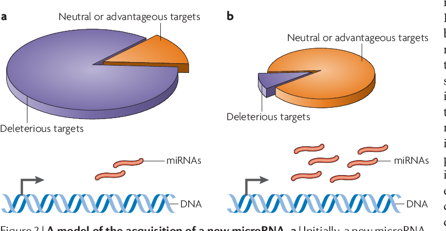 Figure 1 from The evolution of gene regulation by