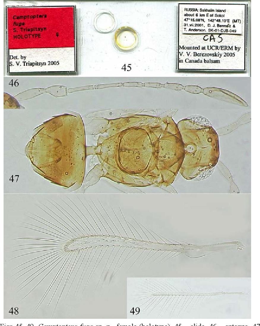 figure 45–49