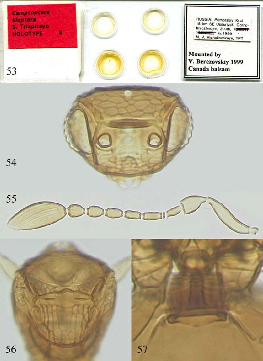 figure 53–57