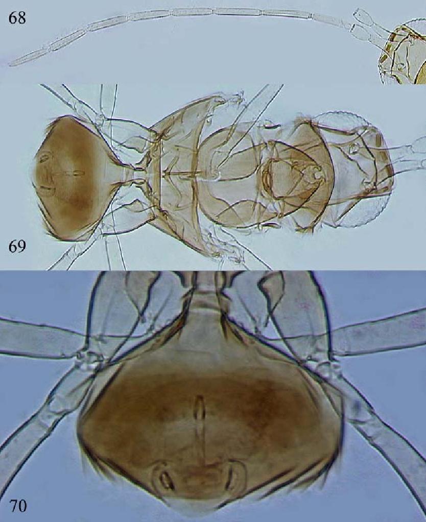 figure 68–70