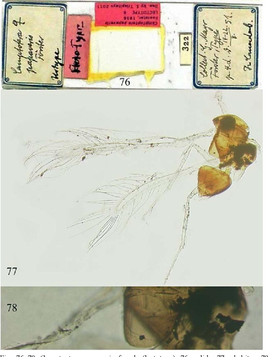 figure 76–78