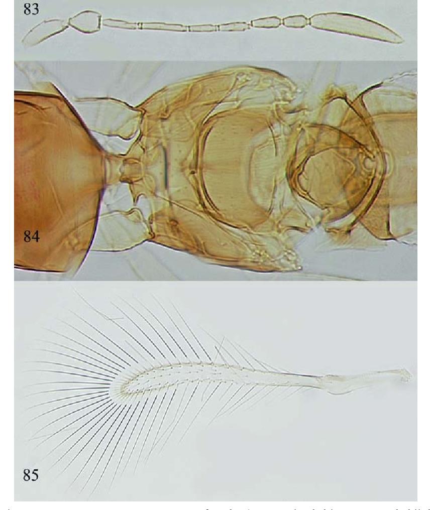 figure 83–85