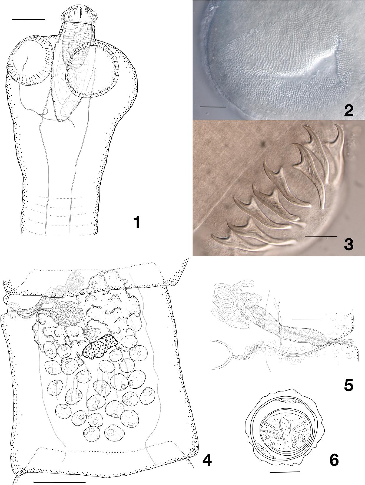 figure 1–6