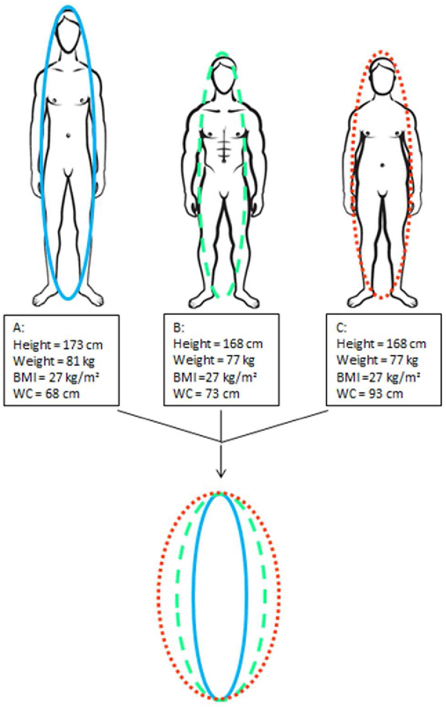 Figure 2 from Relationships between body roundness with body