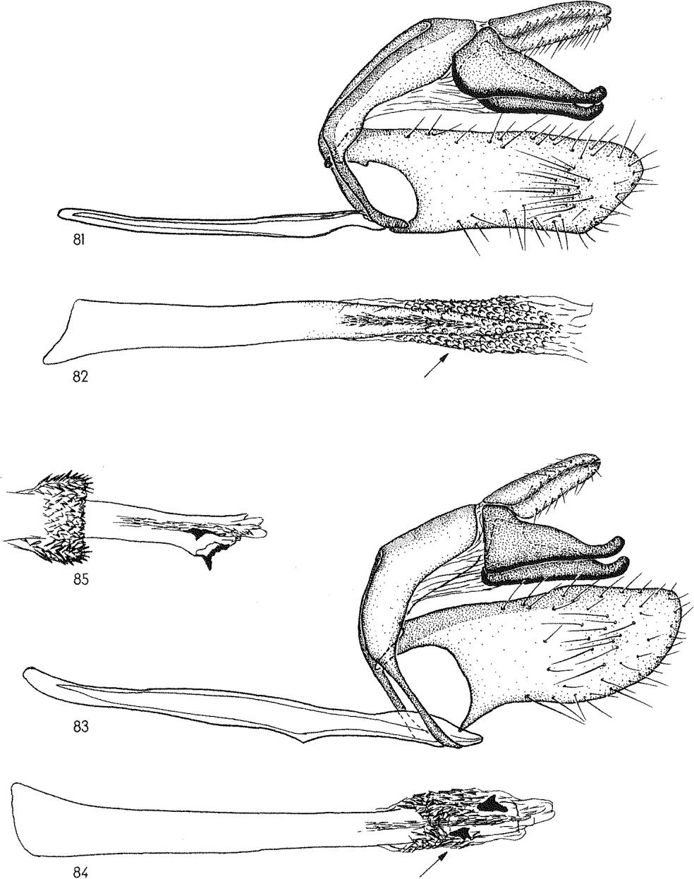 figure 81-82