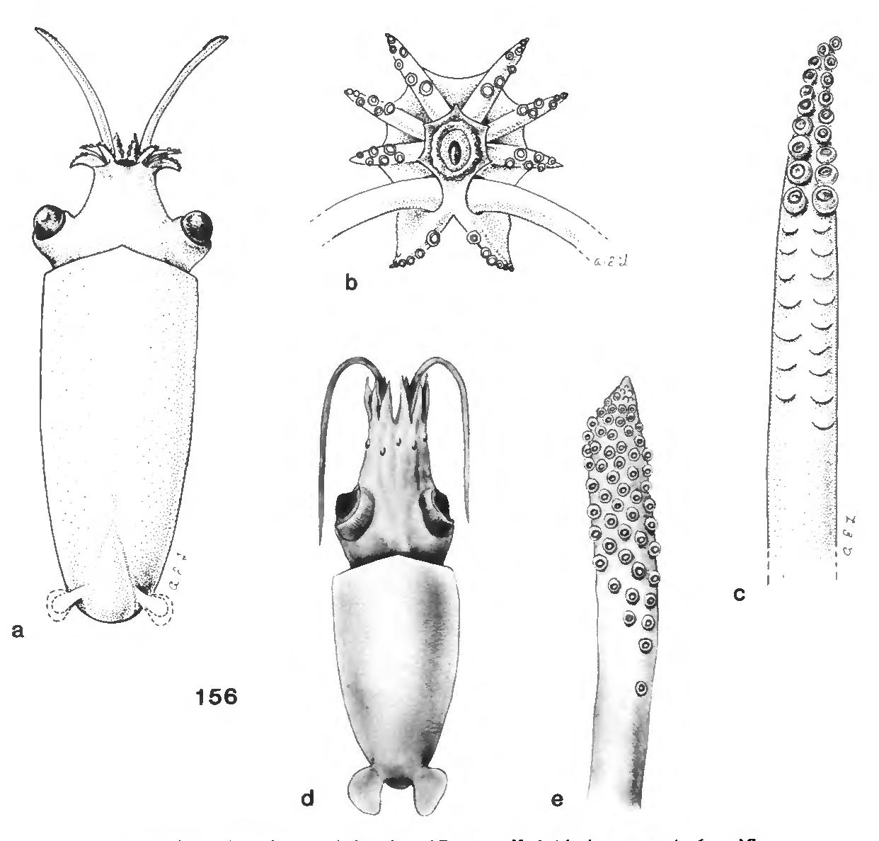 figure 156