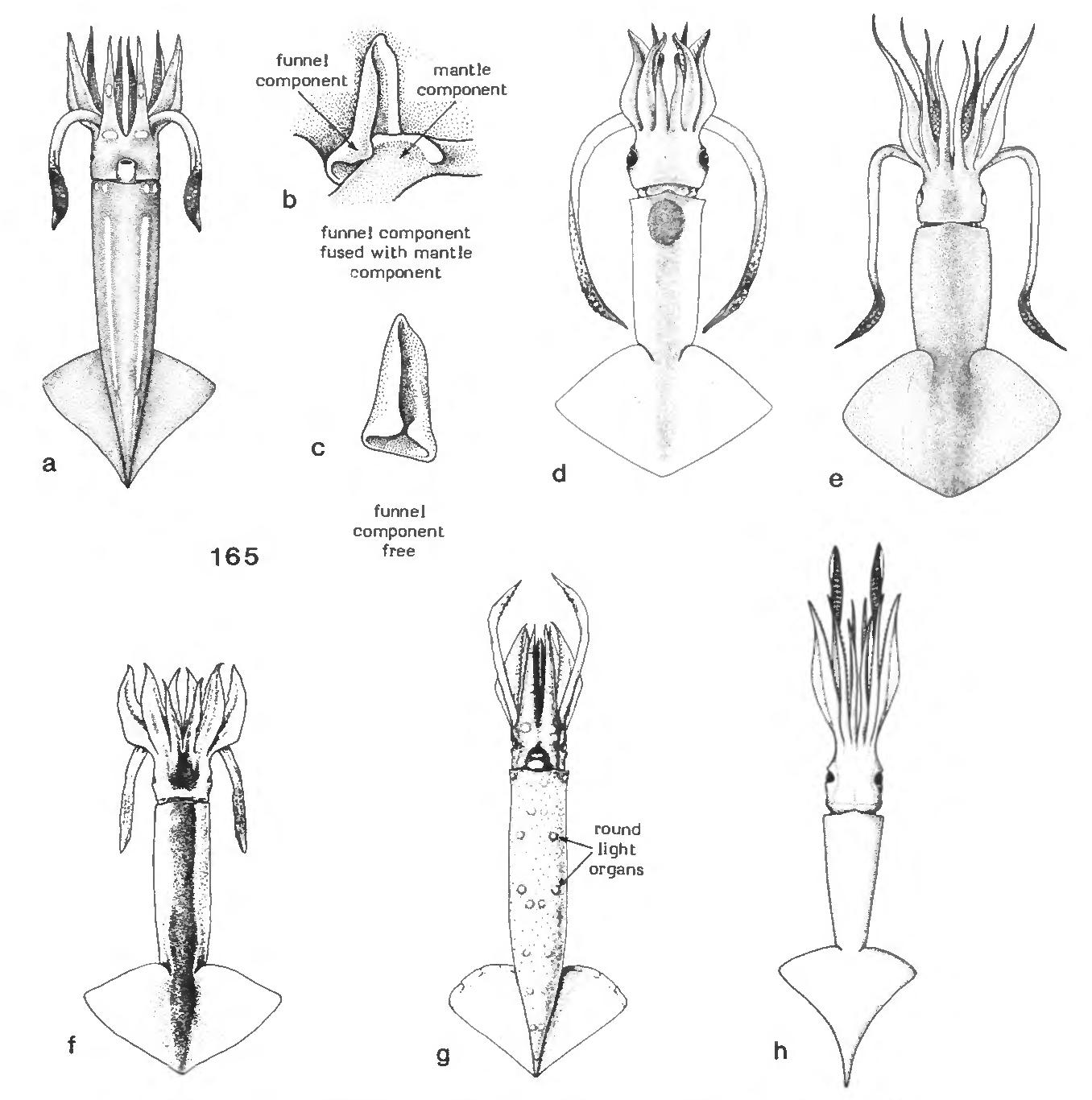 figure 165