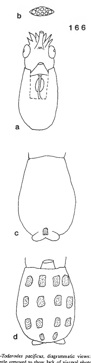 figure 166