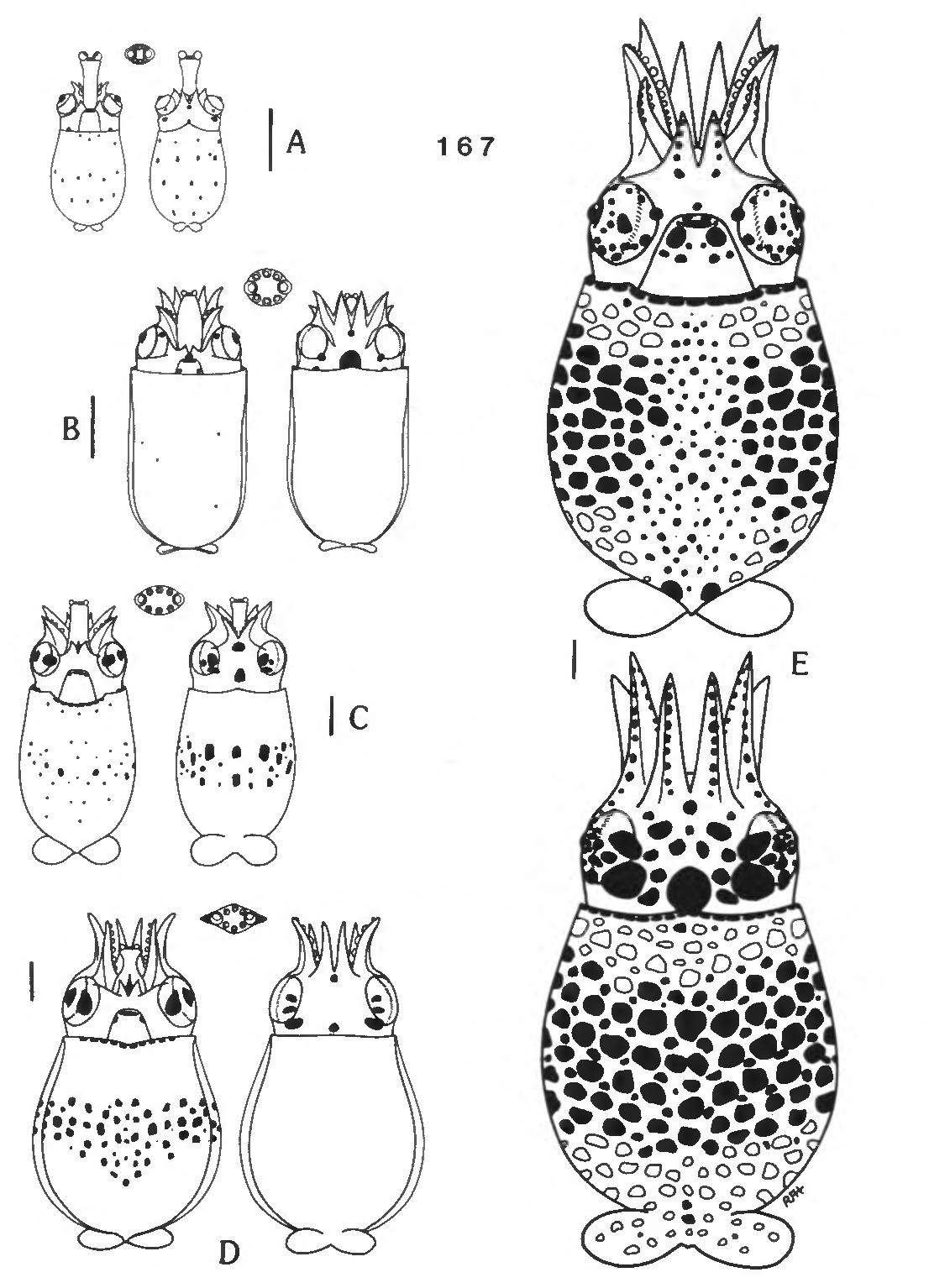 figure 167
