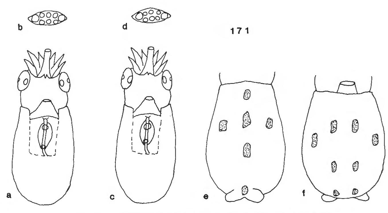 figure 171