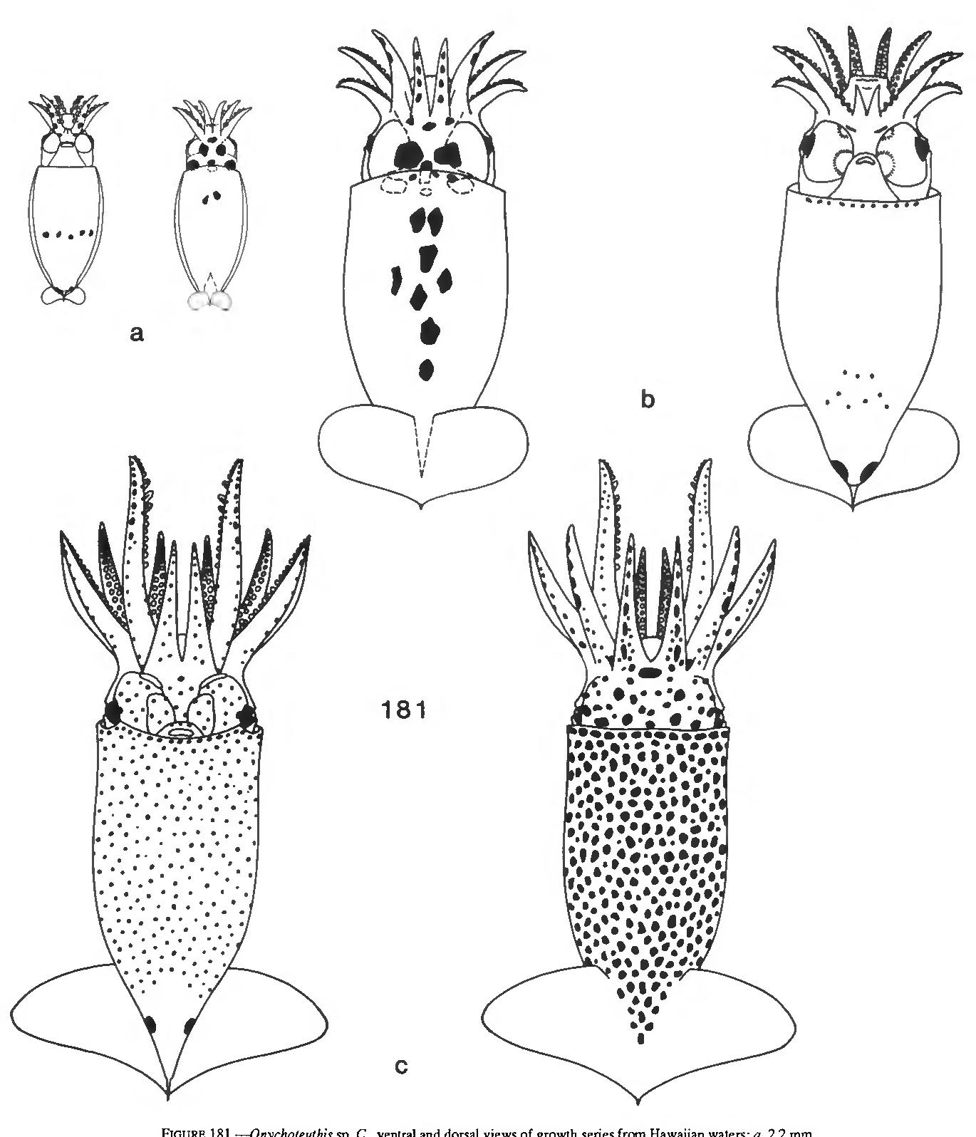figure 181
