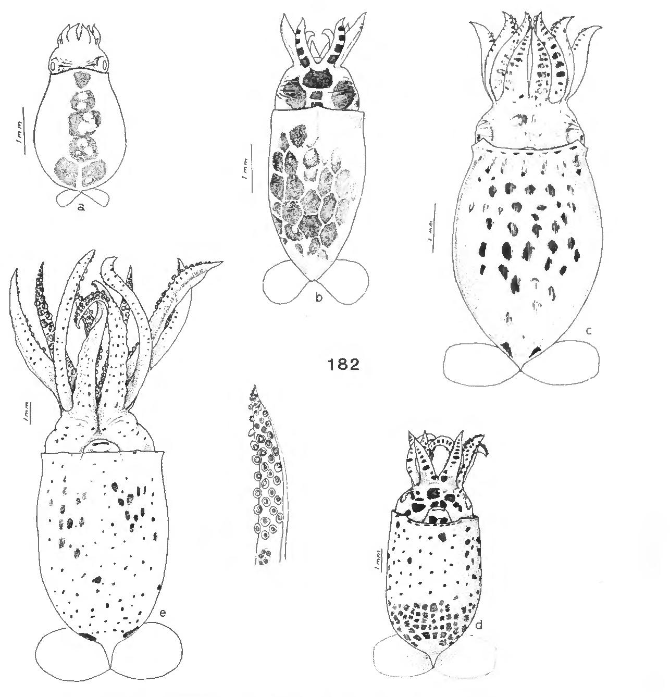 figure 182